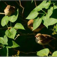 спрятались... :: linnud