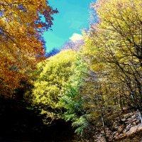 Near A Dilijan! Parz Lake :: MIkael Aslanyan