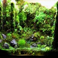 Пейзажные аквариумы :: Nikolay Monahov