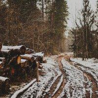 лес :: Дмитрий Адаменко