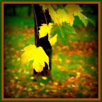 Осень 13 го года ... :: Simeonn