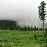 А в горах по утрам туман... :: Ольга Иргит