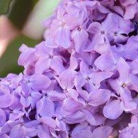 весенние цветы :: Кристина Рубанова