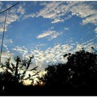 Рассвет в июне... :: Тамара (st.tamara)
