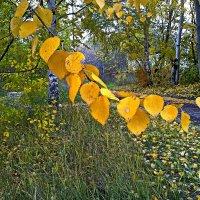 Ну давай у листьев спросим.. :: Любовь Чунарёва