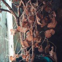 Засох цветок(( :: Света Кондрашова