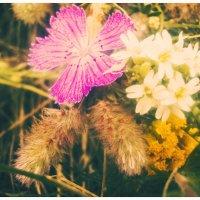 полевые цветы :: Viktoriya Bilan