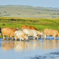 Живительная вода :: юрий Амосов