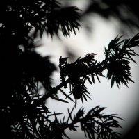 Ночные видения :: Ирина Фирсова