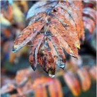 Поздняя осень :: Aquarius - Сергей