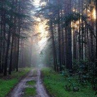 Тайной леса времени дорога... :: Лесо-Вед (Баранов)