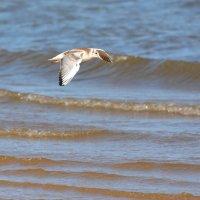 полет над морем :: linnud