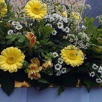 Цветы :: Самохвалова Зинаида