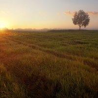 Рассвет... самые короткие ночи... :: Александр Никитинский
