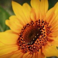 лучик солнца :: Юлия Грей