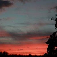На закате дня :: Артем Бардюжа
