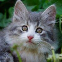 Интересный кот :: Ирина Крохмаль