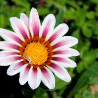 Цветок :: Akira Shiro