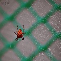 паук :: Карина Дудина