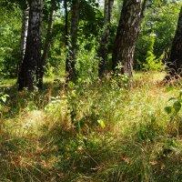 В июльском лесу :: Виктор