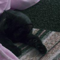жарким летом, только спать :: Юлия Курдыбо