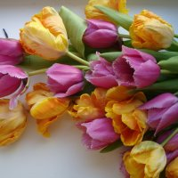 Тюльпаны ... :: Ludmil Sams