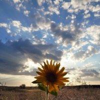 Второе солнце :: Юлиана Мещерякова