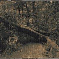 Старое дерево :: Станислав Лебединский