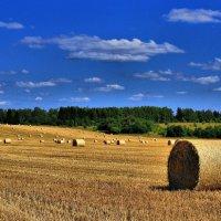 Сбор урожая пшеницы :: Андрей Куприянов