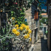 Dubrovnik/Croatia/Walking :: Alena Kramarenko