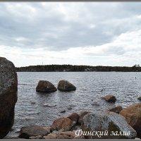 Финский залив :: Lyubov Zomova