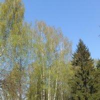 Нежность природы :: Настасья Мерчуткина-Щукина