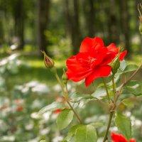 Цветок :: Александр Ануфриев