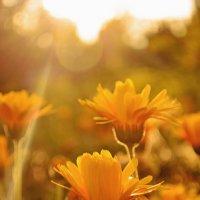 Последний луч уходящего солнца :: Анна Румянцева