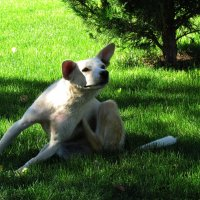 Собачьи приятные моменты :: Marina Timoveewa