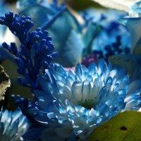 В голубых тонах :: ВАЛЕРИЙ