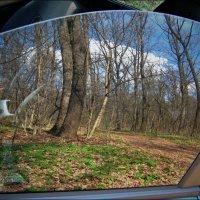 В весеннем лесу :: Татьяна Кретова