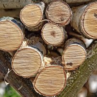 birch firewood :: Дмитрий Карышев