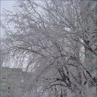 Иней :: Нина Корешкова