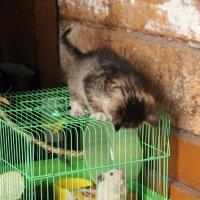 котенок и хомях :: Нина Килина