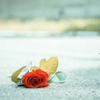 Брошенная роза на асфальте :: Артур Моргун