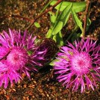 цветочки :: Михаил Жуковский