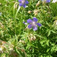 Просто красивые цветочки ! :: НАДЕЖДА КЛАДЧИХИНА