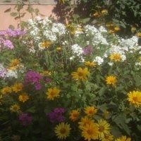 Цветочное великолепие :: Tarka
