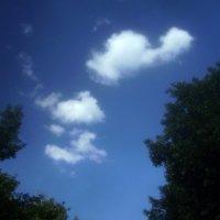 Промеж деревьев облака гуляли :: Tarka