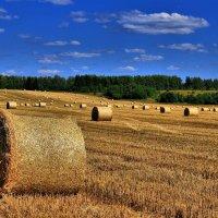 Сбор урожая.Продолжение. :: Андрей Куприянов