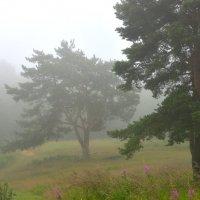 в тумане :: ник. петрович земцов