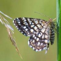 Бабочка :: Иван Щербина