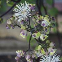 Цветы в саду :: Эльвира Багина