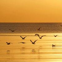 Года летят, как птицы на закате... :: Irina -